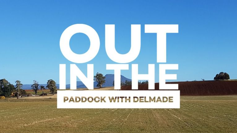 Out in the paddock with Delmade - Edition 1 image