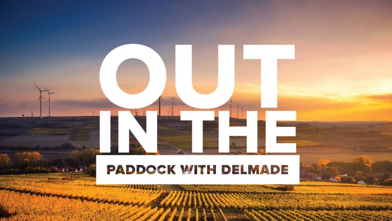 Out in the paddock with Delmade - Edition 2 image